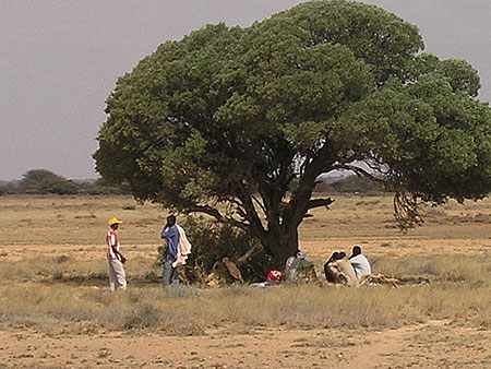Resting under a galool tree in Somalia / Photo: Somali Nomad, flickr