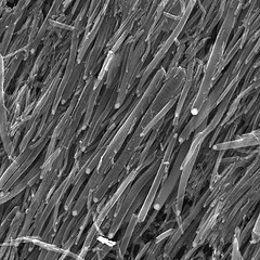 Carbon nanotubes by St Stev (flickr)